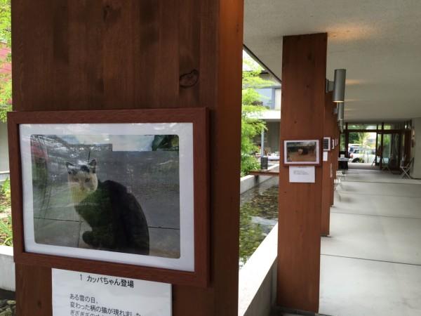柱に猫の写真がいっぱい!!